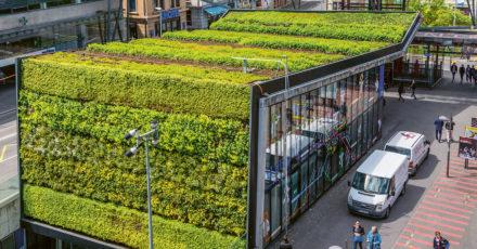 «De multiples moyens pour favoriser la biodiversité urbaine» // www.revuehemispheres.com