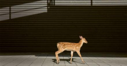 HEMISPHERES N°20 // Le royaume posthumain des cerfs // Photo: Yoko Ishii